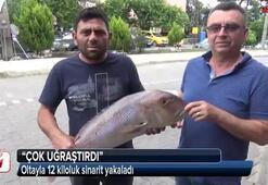 Oltayla 12 kiloluk sinarit yakaladı