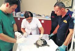 Kaplumbağaya itfaiye müdahalesi