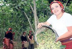 Herkes Türk fındığı yiyecek