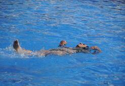 Burası ne Ege ne Akdeniz Turistler akın akın geliyor