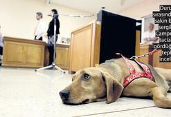 Köpek Campeon tanık oldu