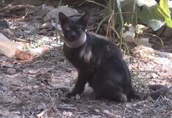 Günlerdir boynunda kavanoz parçası ile yaşayan kedi kurtarıldı