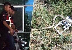 Akılalmaz olay Yılanı vurayım derken hamile eşini öldürdü