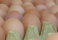 Ülkede alarm verildi Yumurtada dioksin skandalı