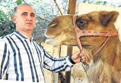 Aydın'dan deve sütü ihracatı yapılacak