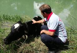 İtfaiyenin çamurdan kurtardığı ineğine Kalk kızım, eve gidelim dedi
