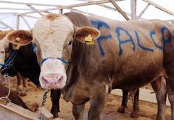 Falcao satıldı 16 bin liraya...