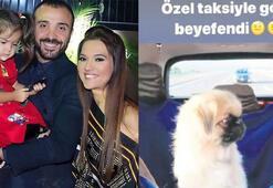 Köpeği için VIP araç kiraladı