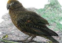 Dünyanın en büyük papağanının kalıntıları bulundu