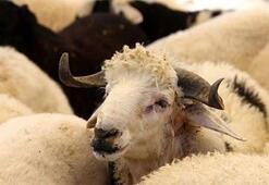 Kötü muamele hayvanı strese sokar