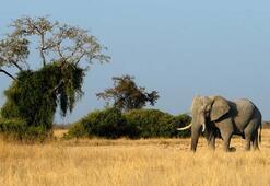 Afrikada görülmesi gereken yerler