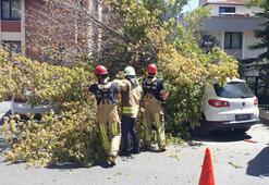 Floryada bir ağaç, 3 aracın üzerine devrildi