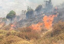 Balıkesirde peş peşe orman yangınları