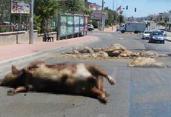 Caddeye dökülen kurban atıkları zor anlar yaşattı
