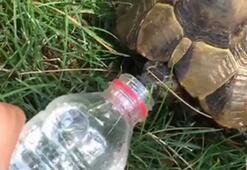Sıcaktan bunalan kaplumbağaya su içirdi