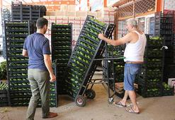 Antalyadan Polonyaya avokado ihracatı