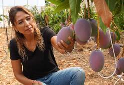 Antalyada hasadına başlandı Tanesi 35 liradan satılıyor