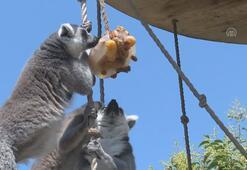 Hayvanlar buzlu menülerle serinliyor