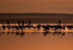Flamingoların göçü fotoğraflara yansıdı