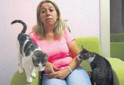 Çoğu hasta 50 kediye kalacak ev aranıyor