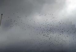 Leyleklerin göç molası havadan görüntülendi