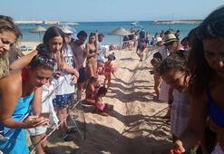 Didimde yavru caretta carettalar denizle buluştu