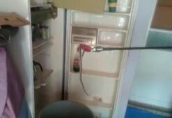 Buzdolabındaki yılan korkuttu