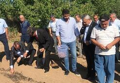 Mucize bitki safranda hedef 20 kilogram