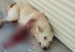 Sesinden rahatsız olduğu köpeği av tüfeği ile vurdu