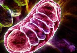 Mitokondri nakli nedir Mitokondri nakli kimler yaptırıyor