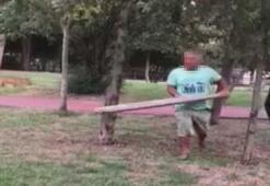 Babasını ısırdığı iddia edilen sokak köpeğine kalasla saldırdı