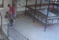 5 kediyi öldüren köpeğe öldüresiye dayak kamerada