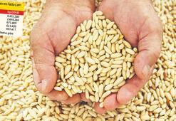 Bal üretimi arttı fıstık 1000 TL oldu