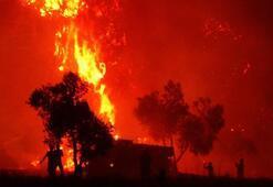Bir ayda 300 orman yandı Uzmanlar uyardı