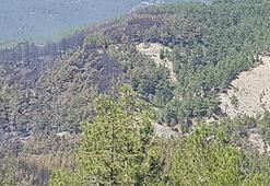 Kaşta orman yangını söndürüldü