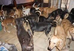 Bahamalarda bir kadın evini 97 köpeğe açtı