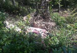 Mantar toplarken devrilen ağacın altında kalarak öldü