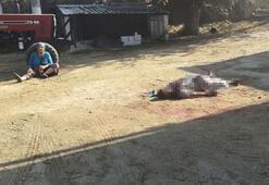 Baba vahşeti Annesinin gözü önünde öldürdü