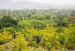 5 yılda 50 milyon ağaç dikilecek