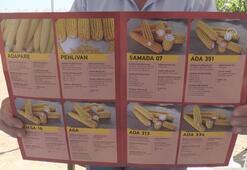 Yerli ve milli mısır çeşitleri tanıtıldı