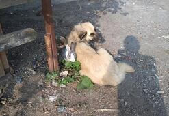 Tavşan ile köpeğin dostluğu görenleri şaşırtıyor