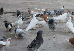 Uzmanlar uyardı: Beslediğiniz kuş katiliniz olabilir