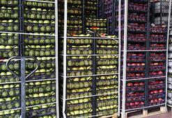Yaş meyve sebze ihracatında lider Rusya
