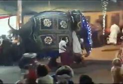 Sri Lanka'da fil kalabalığa daldı: 17 yaralı
