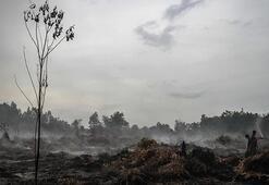 Korkunç bilanço açıklandı: 330 bin hektar orman kül oldu