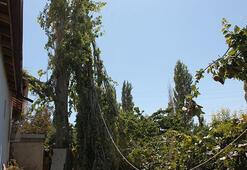 Başı, kestiği dal ile ağacın arasına sıkışınca öldü