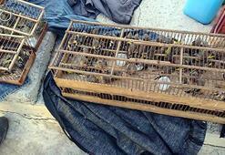 Koruma altındaki kuşları yakalayan kişiye 132 bin lira para cezası