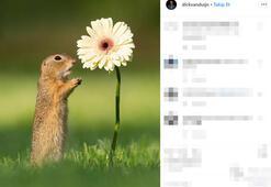 Sincapların çiçek tutkusu