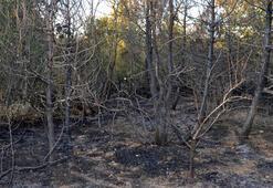 Malkarada çıkan orman yangınında 800 ağaç zarar gördü