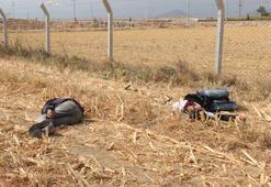 Mısır tarlasında şok görüntü Gören telefona sarıldı